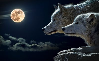 wolf-moon-600x372